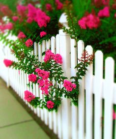 pinterest white picket fence with flowers | Picket Fences - a gallery on Flickr