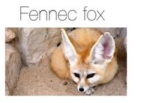 """""""Fennec fox"""" by sin-carter ❤ liked on Polyvore featuring interior, interiors, interior design, home, home decor and interior decorating"""