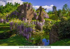 The famous Garden of Ninfa in the spring, Lazio, Italy #Ninfa #GiardinoDiNinfa #Lazio #Nature #Flowers #Wisteria #Spring #Idyllic #River #Oasi #Sermoneta #Italy #Europe #Ruins #Historic #Caetani