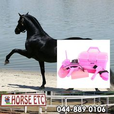 Every horse likes to be spoiled and pampered, visit us at Horse ETC for all your special grooming kits. #equestriansports #horseriding #equestrainequipment