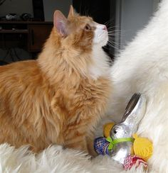 Happy Easter from Murchyk the Cat
