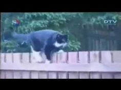 video lucu binatang: funny animals so cute