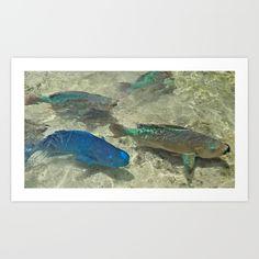 Parrotfish - $18