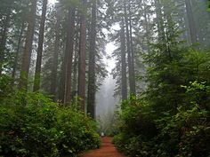 Hiking among the giants in Redwood NP, California