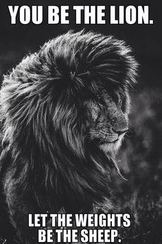 Lion quote 2