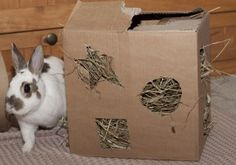This will take only moments to make, keep your rabbit entertained and is absolutely free! Materials: Cardboard box Hay Scissors or Utility Knife Cost: Free! Begin by cutting random shapes on all four sides of your cardboard box. You want to make them at least 3 inches wide so your rabbit will be able to access the hay but not too wide that the hay is always falling out of the holes. Keeping the shapes smaller also provides more of a challenge for your rabbit. When you are finished cutting…