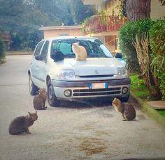 Casagiove, Parco San Vincenzo: tentano di avvelenare maxi colonia di gatti. Ecco cosa sta succedendo a cura di Giovanna Longobardi - http://www.vivicasagiove.it/notizie/casagiove-parco-san-vincenzo-tentano-avvelenare-maxi-colonia-gatti-cosa-sta-succedendo/