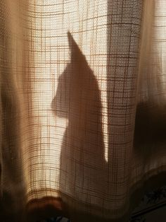 My cat Charlie playing with shadows. My World, Shadows, Dog Cat, Cats, Gatos, Darkness, Kitty Cats, Cat, Kitty
