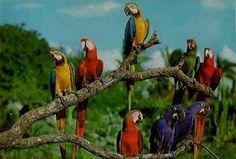 Aves Argentinas.Misiones