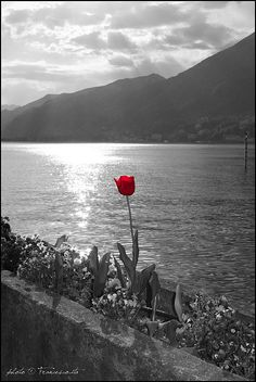 Tulip & Stars on the Como Lake by francesco.ita, via Flickr