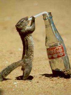 Imagenes Graciosas de Animales | Imagenes Graciosas | Fotos Graciosas