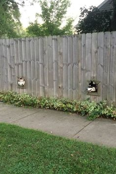 These cute doggies each have a pet fence window!! They just wanna keep track of what is going on in their neighborhood.