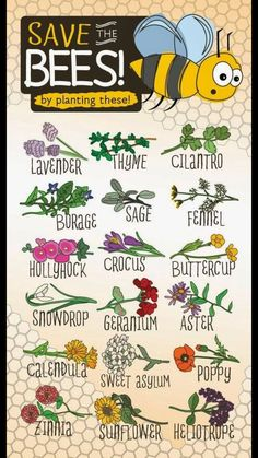 Bees are responsible for most of pollination and they are becoming scarce. Help save the bees by planting these flowers. Bees are responsible for most of pollination and they are becoming scarce. Help save the bees by planting these flowers.