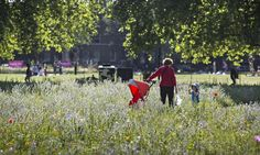 A urban meadows at London Fields, Hackney, London