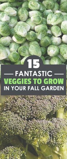 Knowing what to plant in a fall garden will make your growing efforts in this challenging season much easier. These 15 plants thrive in fall, so plant them!