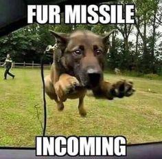 Fur missile incoming Funny Animal Jokes, Funny Dog Memes, Cute Funny Animals, Funny Animal Pictures, Animal Memes, Cute Baby Animals, Funniest Memes, Pet Memes, Animals Dog