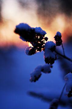#winter #makro #phot #by #me