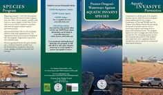 Protect Oregon's waterways against aquatic invasive species, by the Oregon State Marine Board