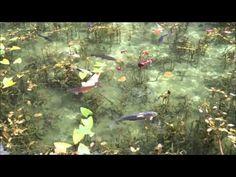 話題沸騰中!まるで絵画のような美しすぎる岐阜の「モネの池」 | tabit [タビット] | 上質な旅を愛する人のためのトラベルメディア