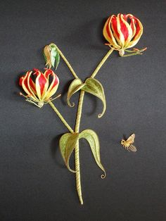 Allison Cole  Gloriosa Lily
