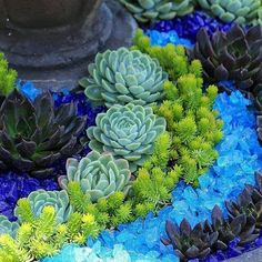 Beautiful succulents and blue glass arrangement. ...