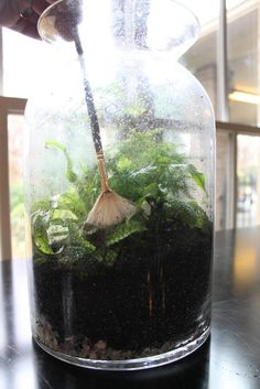 """""""A paintbrush is useful for getting any soil off of the leaves and the sides of the container."""" Miss Kopy Kat Terrarium Tips Bottle Terrarium, Air Plant Terrarium, Garden Terrarium, Succulent Terrarium, Terrarium Ideas, Succulent Gardening, Planting Succulents, Gardening Tips, Urban Gardening"""