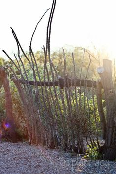 Natural gate made from ocotillo canes and old tree branches.  #Sustainable #Landscape