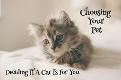 Kitten Philosophy is to always help hoomans make the bed nice and comfy Cute Kittens Cute Kittens, Grey Tabby Kittens, Fluffy Kittens, Cats And Kittens, Cats Bus, Kitty Cats, Crazy Cat Lady, Crazy Cats, Girl Cat Names
