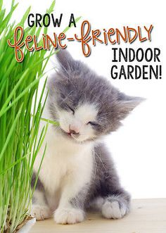 There is no better way to enjoy spring all year 'round than to bring your garden indoors. Let your indoor cat experience spring greenery by creating an indoor kitty garden. Choose the proper plants, so Mittens can enjoy the days in safety and satisfaction. Combine the coveted catnip with a bunch of fragrant, kitty-safe herbs to create a lovely, indoor oasis. Are you unsure which plants to choose? eBay can help you develop a garden your cat will love.