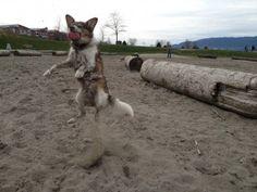 Athletic dog!