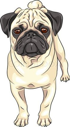 Grafiken von 'Farbe Skizze nettes ernstes Hund fawn Mops Rasse'