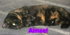 Aimee is a 3 yr old female Tortie.  My friend needs to rehome her. She does fine with dogs under 30lbs. & is good with small children. She has not been tested w/ larger dogs or other cats. She is microchipped and spayed.  She still has her claws, but has always been an indoor cat. She is in New England. If interested pls text mandjsowards@gmail.com or pm me on Facebook.