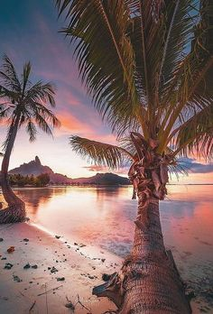 Best Honeymoon Destinations In 2019 For Unforgettable Moments ★ best honeymoon destinations tahiti beach monk lens destinations 70 Best Honeymoon Destinations In 2020 Palm Tree Pictures, Beach Pictures, Romantic Vacations, Romantic Travel, Beautiful Landscape Photography, Beautiful Landscapes, Ocean Photography, Honey Moon, Places To Travel