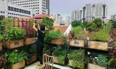 edible rooftop - Google Search