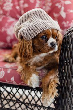 Fashionista dog