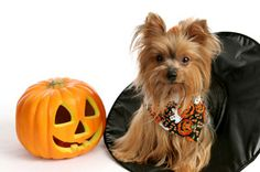 Have a safe Halloween with your pet