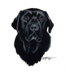 BLACK LAB Dog Art Print Signed by Artist DJ Rogers by k9artgallery, $12.50
