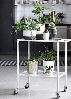 Decora con plantas es una de las tendencias esta temporada #tendenciasdeco2015 #housedoctor #estilonordico