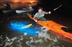 Bioluminescence tour on Mosquito Lagoon.