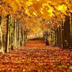 The gold of fall...