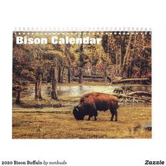 Shop 2020 Bison Buffalo Calendar created by sunbuds. Personalize it with photos & text or purchase as is! Shadow People, Event Template, Bison, White Elephant Gifts, Holidays And Events, Day Up, Gifts For Family, Buffalo