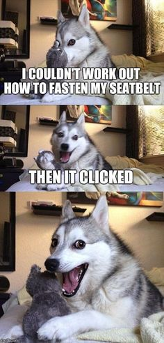 Haha thats a funny one doggo! - Funny Husky Meme - Funny Husky Quote - Haha thats a funny one doggo! The post Haha thats a funny one doggo! appeared first on Gag Dad. Pun Dog Meme, Bad Pun Dog, Dog Jokes, Funny Animal Jokes, Crazy Funny Memes, Really Funny Memes, Stupid Funny Memes, Funny Relatable Memes, Funny Animal Pictures