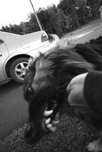 Emergency veterinarian - http://www.medicalfieldcareeroptions.com/veterinarycareers.php