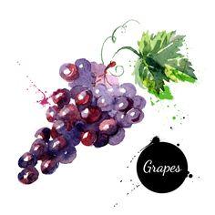 Watercolor delicious grapes vector material