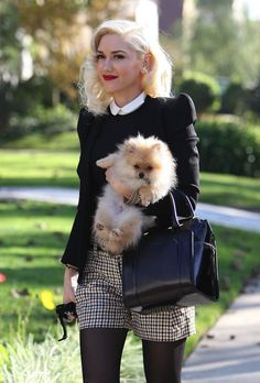 Portez votre chien comme un bébé comme Gwen Stefani - Porter Bebe Gwen Stefani, Cute Puppies, Cute Dogs, Chihuahua, Cute Pomeranian, Black Pomeranian, Celebrity Dogs, Cute Creatures, I Love Dogs