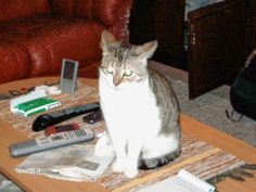 Täysin arkista       : Nostetaan kissa pöydältä, harrastetaan laihduttami...