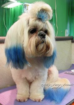 Pet Grooming: The Good, The Bad, & The Furry: Can You Color My Dog?