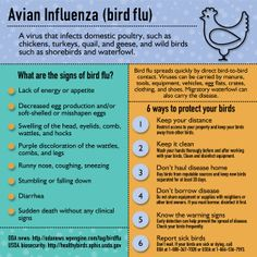 How To Protect Your Chickens From Bird Flu  Info-graphic courtesy of Oregon Department of Agriculture