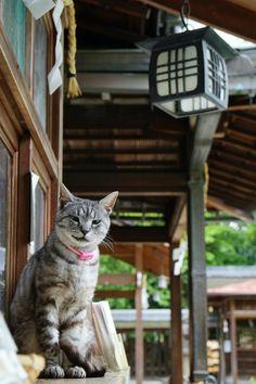 chitaka45 Hope You Enjoy Kyoto — 梅宮大社