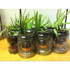 """Self watering planter or seed starter made from recycled Gatorade and soda bottles. Cut bottle in half, drill 1/4"""" hole in cap, string 12"""" yarn or string folded in half thru hole. Tie knot. Let string sit in base. Add dirt, plant or seeds, and water from the top! Easy!"""